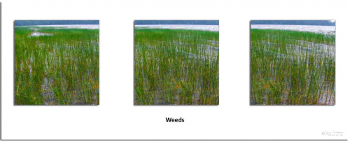Triptych Weeds
